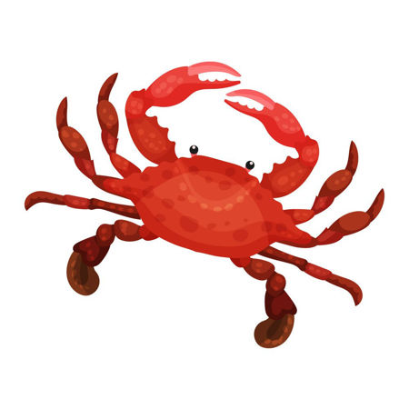 Picture for category Crab