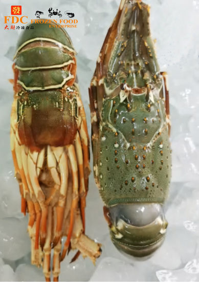 Picture of LOBSTER <br> 龙虾 <br>(600g - 700g)
