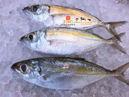 Picture of IKAN LOLONG  <br> 大眼<br> (1PKT 3ekor x 650g+-)